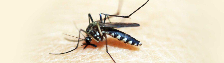 muggenbulten en huidverzorging - LIN Skincare
